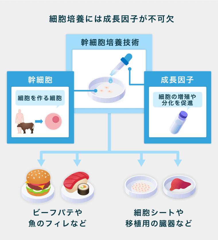 nuproteinのサービス画像